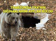 Trabzon'da PKK'ya Bir Darbede Ayılardan