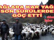 Kar yağmasıyla Araklı'lı  Son Koyun Sürüleride  Göç etti