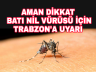 Nil Virüsü için Trabzon ve çevre iller uyarıldı.